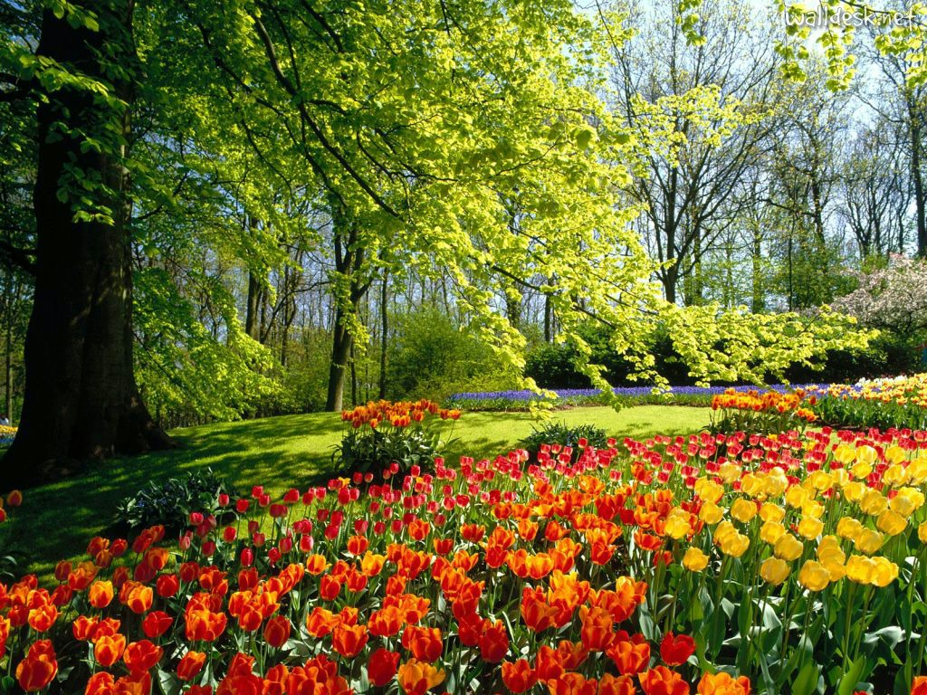 Keukenhof-Gardens-of-Holland
